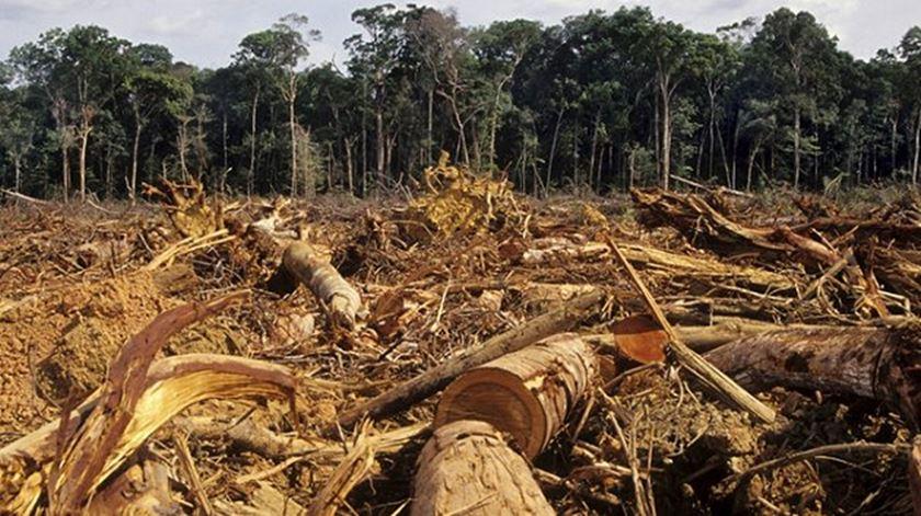 Brasil. Desflorestação da Amazónia cresce quase 30% num ano