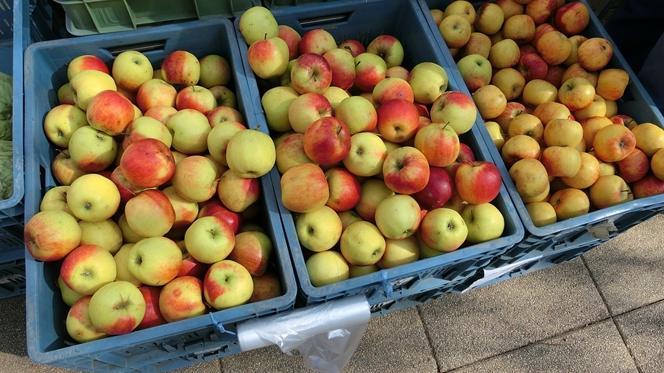 Quer trabalhar? Carrazeda precisa de gente para as campanhas da maçã, azeite e vinho
