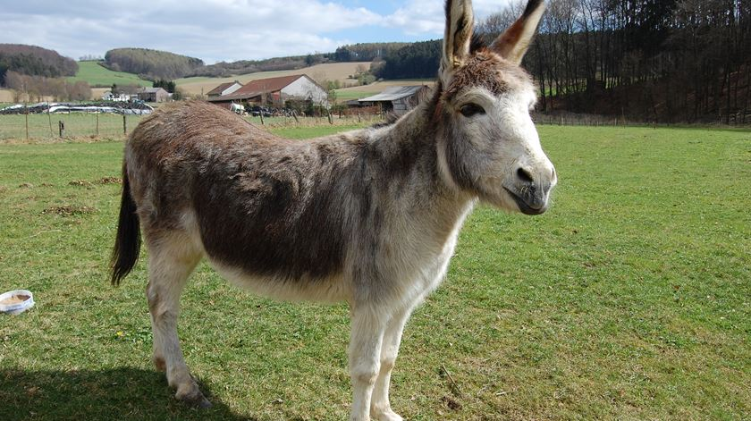 Quantos ditados populares têm referências a animais?