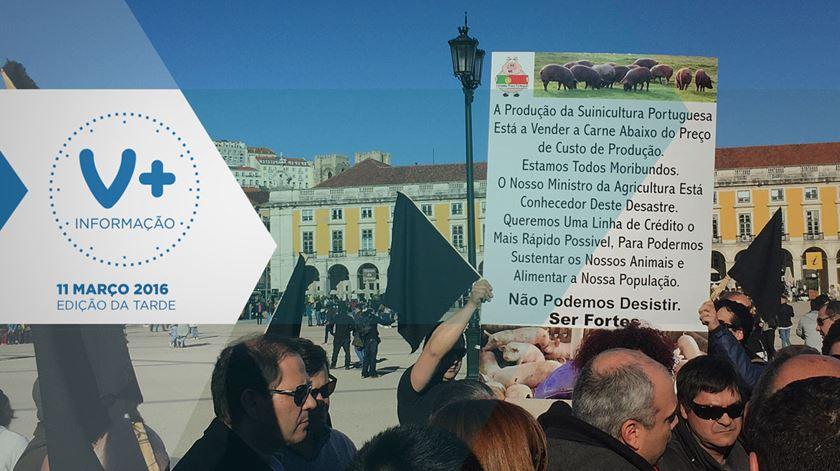 """Suinicultores em protesto """"invadem"""" Lisboa com mais de 300 camiões"""