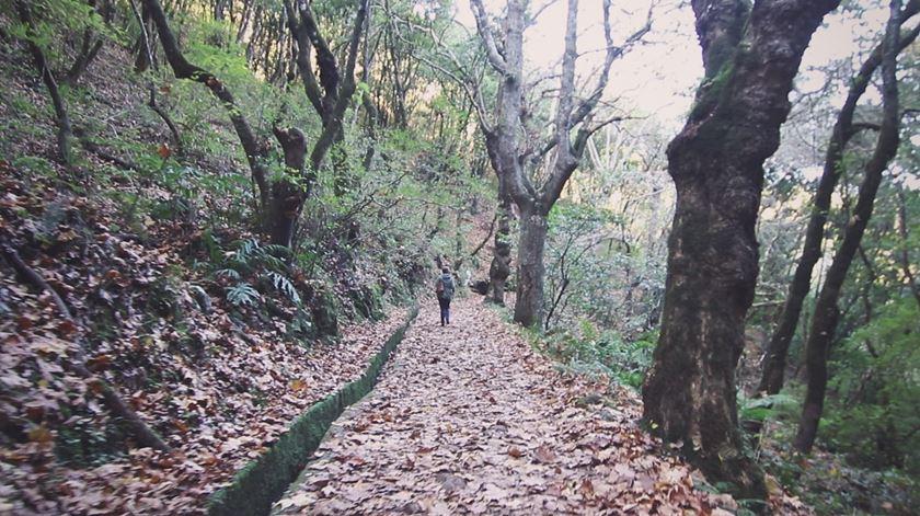 Laurissilva: uma floresta que é património mundial