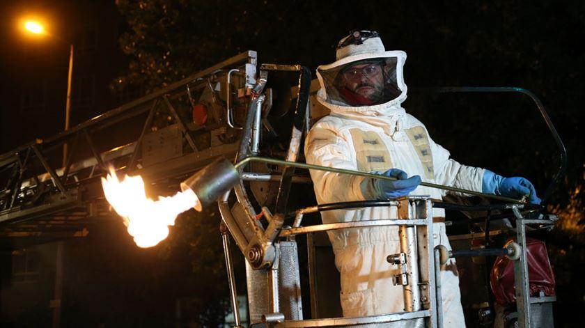 Operação anti vespa asiática. Foto: Estela Silva / Lusa