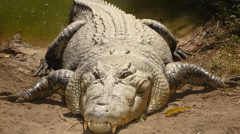 Vinte milhões de anos mais velho do que se pensava. Foto: Wikipedia